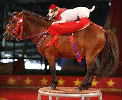 dog and pony